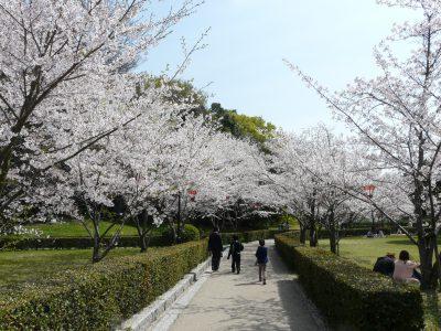 丸亀城桜まつり @ 丸亀城 | 丸亀市 | 香川県 | 日本